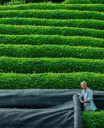 Dramatically Different: Gyokuro Green Tea